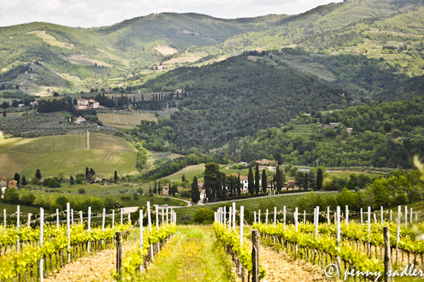 @PennySadler 2012 - 2013 All rights reserved. Panzano in chianti