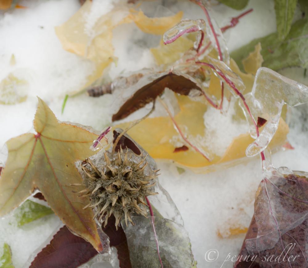 Colorful leaves encased in ice Dallas @PennySadler 2013