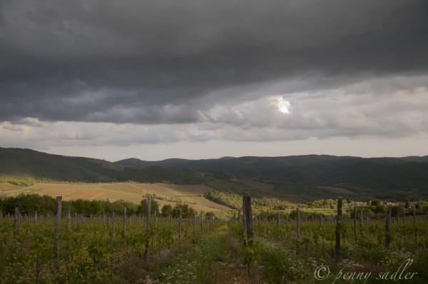 Vineyard in Panzano in Chianti, Tuscany @PennySadler 2014