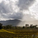 Postcard From A Vineyard in Napa Valley, California