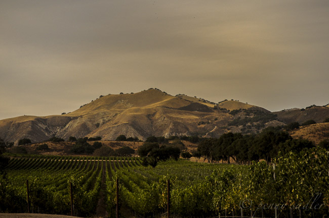 Postcard Santa Barbara Califoria Wine Country