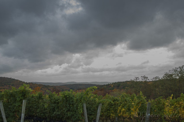 A trip to Dutchess County wine Country New York @PennySadler 2014