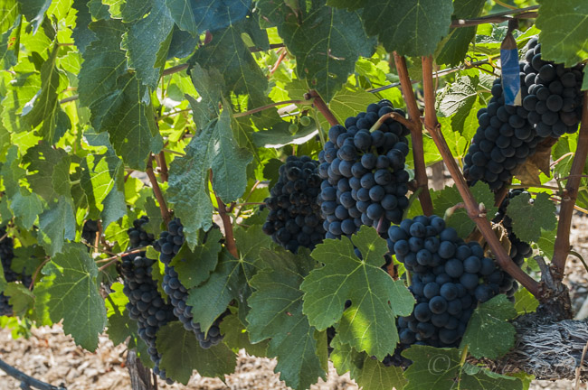 Exploring a Remarkable Winery: Refugio Ranch