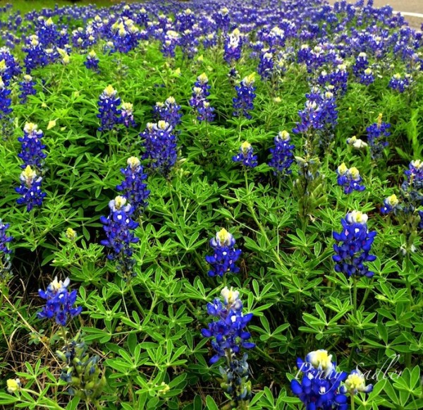 17 reasons why you should go to the Texas hill Country now. @PennySadler