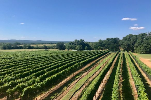 Vineyards in the Texas Hill Country AVA