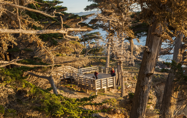 All You Need to Know Before Visiting Lone Cypress, California