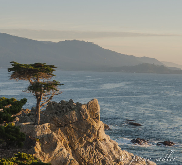 Postcard: Pebble Beach and the Lone cypress @PennySadler 2015