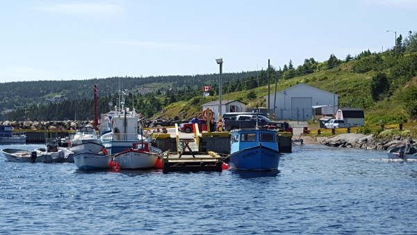A colorful fishing fleet in Bay Bulls, where we went whale watching! St. John's, Newfoundland