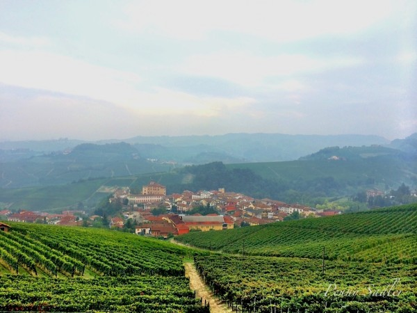 Postcard from Barolo Vineyard in Piemonte, Italy @PennySadler 2015