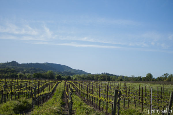 72 Hours in Sonoma County California &@64; www.adventuresofacarryon.com