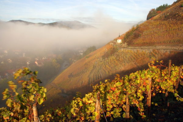 The consumers guide to the wines of Alsace