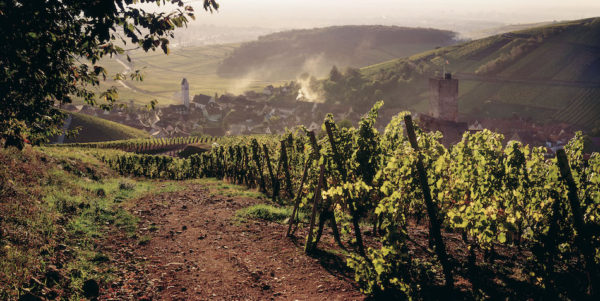 consumers guide the wines of Alsace France