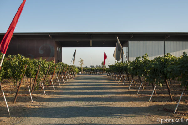 The Wine Abides, Lodi