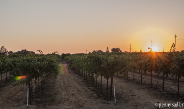 Wine Bloggers Meet in Lodi, California @PennySadler 2016
