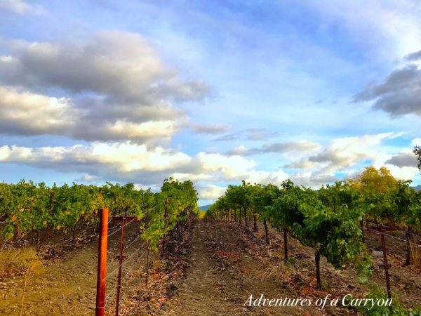 Northern California Wine Country from The Perfect Time To Visit Napa and Sonoma Is Now