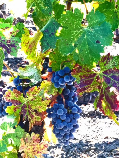 The Perfect Time To Visit Napa and Sonoma is now ©PennySadler 2017