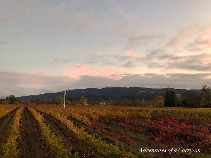 Why Visit America's #1 Vineyard Vincent Arroyo