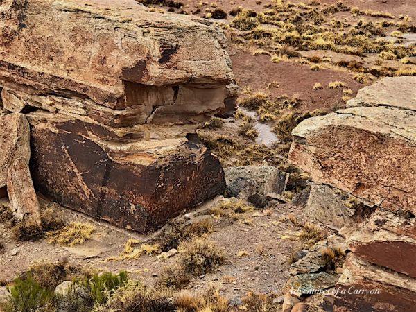 Newspaper Rock, The Painted Desert, Arizona