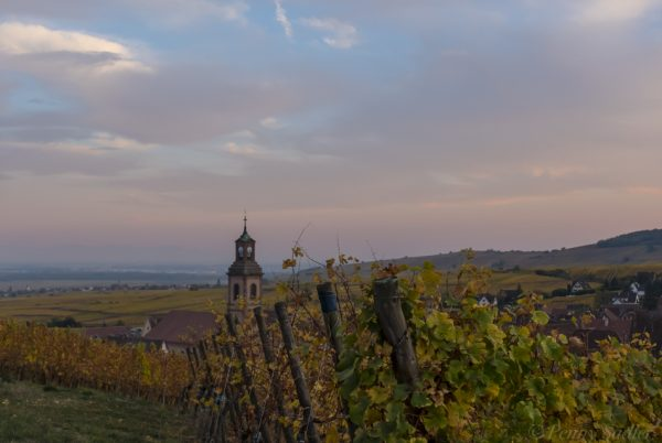 Schoenberg vineyards at dusk with view of church in background