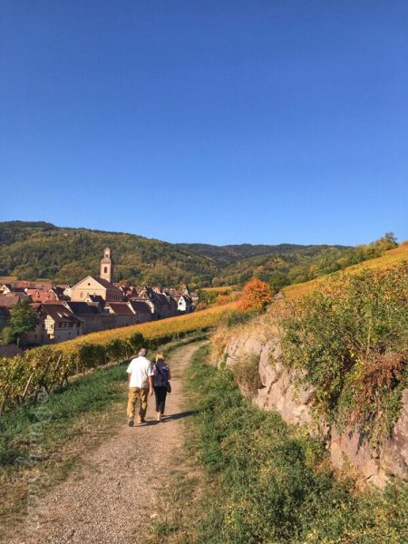 alsace wine trail from ribeauville, schoenenbourg vineyard