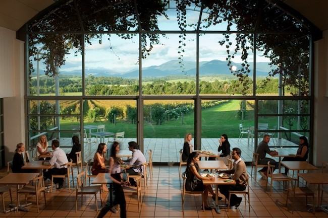 vineyard and wine tasting in Melbourne
