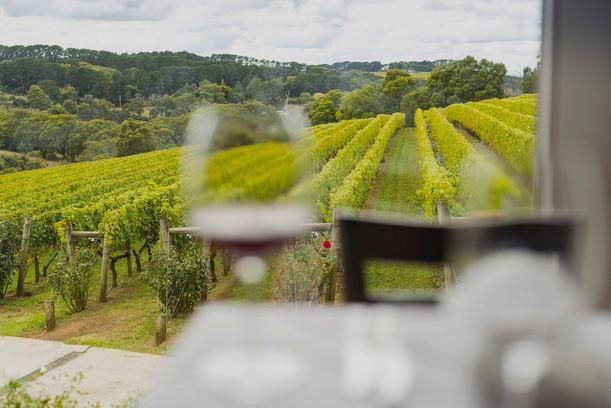 Paringa Estate vineyards, Melbourne wine tasting