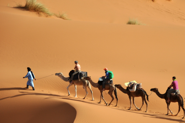 small group travel riding camels in the Sahara desert