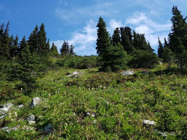 Hiking Trails on Blackcomb Mountain