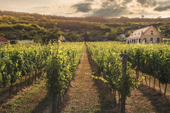 Wine tasting, the best of the Greek Islands