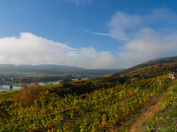 Vineyards near Krems, Austria