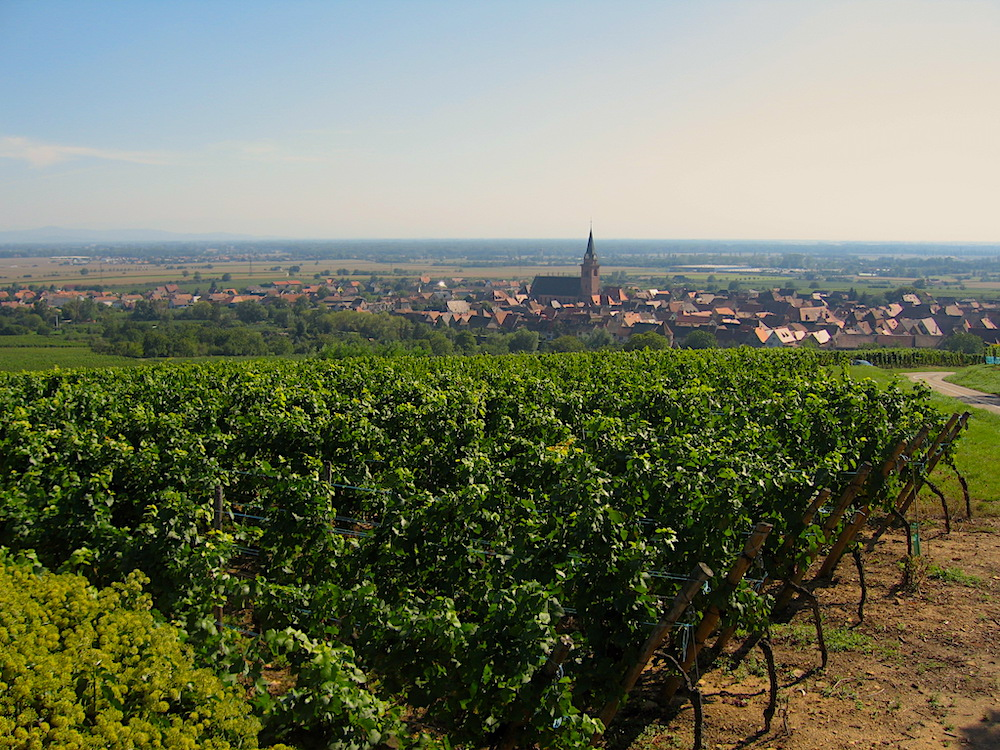 Bergheim vineyards Alsace Domaine Deiss