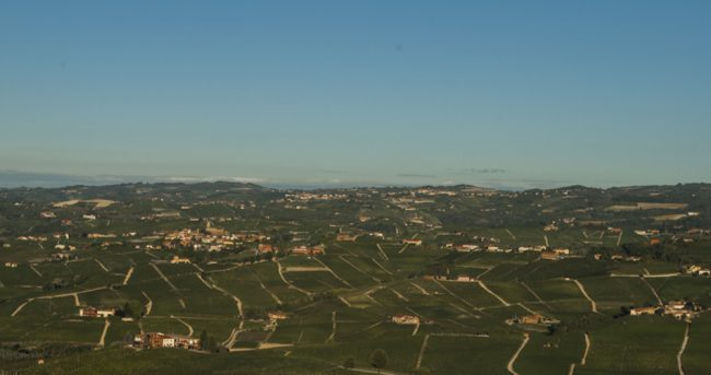 Vineyard in Piedmont from Real Wine and Tastes from Italy and Beyond