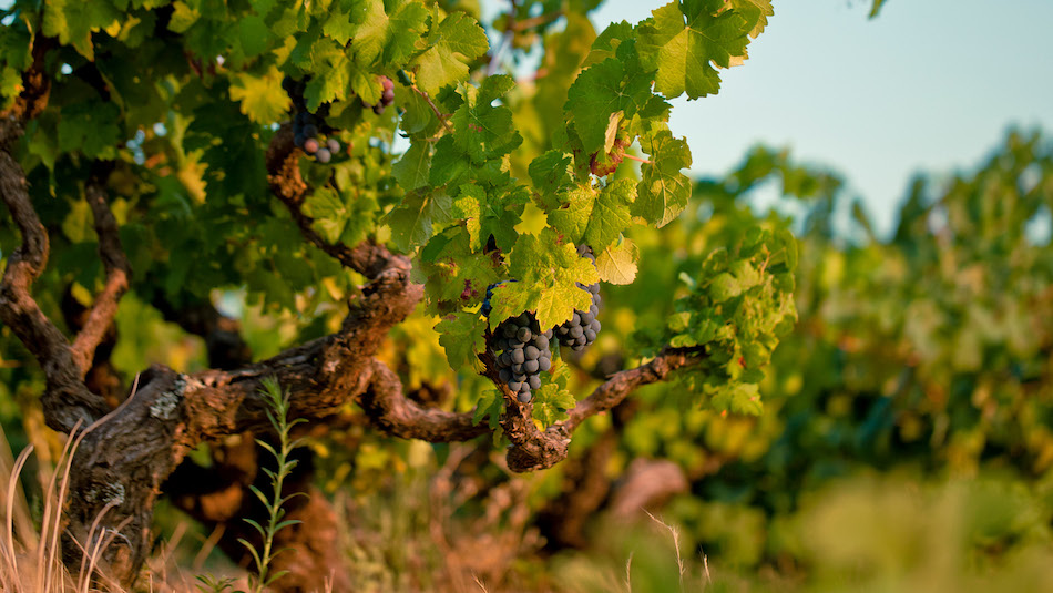 Encruzado A Wine From Portugal You need to try now