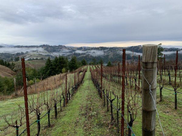 Hirsch Vineyard Sonoma Coast