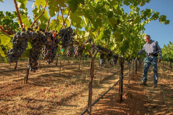 El Dorado Wine Country Rhone Wines n the Sierra Foothills