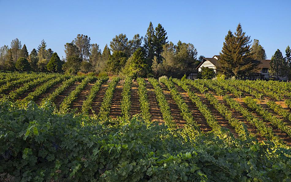 Lava Cap Winerty vineyards