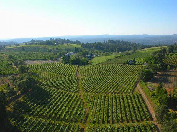 Sierra Foothills Wine Country California