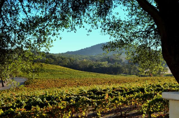 vineyards at David Girard in El Dorado Wine Country